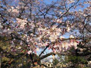 熊谷中央公園