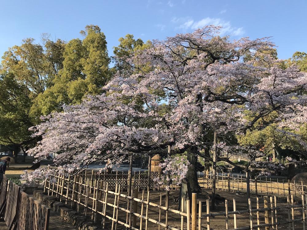 熊谷中央公園にいます。
